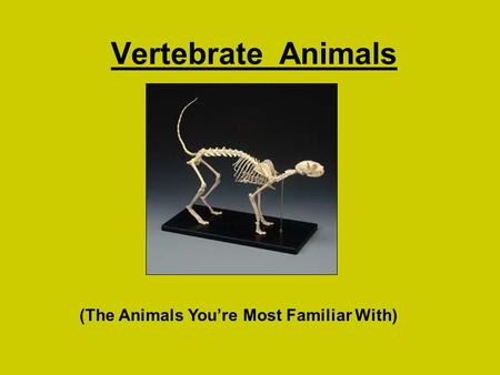 Vertebrate Animals (The Animals You're Most Familiar With)