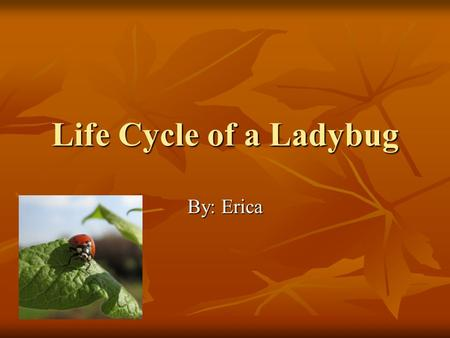 Life Cycle of a Ladybug By: Erica Egg Stage 1 Interesting Facts: They are small, oval, and pale yellow May produce 1,000 eggs Emerges in about in 4 days.