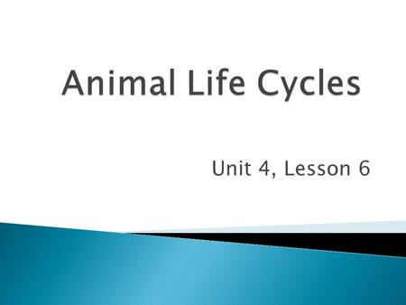 Animal Life Cycles Unit 4, Lesson 6.