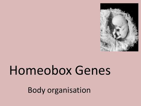 Homeobox Genes Body organisation.