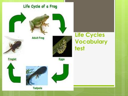 Life Cycles Vocabulary test. offspring  The baby of an organism.