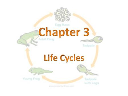 Chapter 3 Life Cycles.