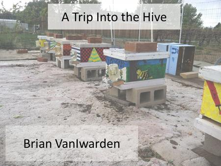 A Trip Into the Hive Brian VanIwarden. Parts of the Hive On average there are about 50k bees in a hive during the summer Honey Super Frame w/ wax foundation.