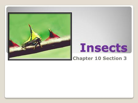 Insects Chapter 10 Section 3. Body Structure three sixone one or two Arthropods with three body sections, six legs, one pair of antennae, and usually.