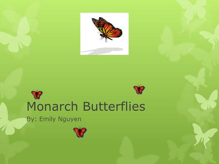 Monarch Butterflies By: Emily Nguyen. Where do monarch butterflies live? They migrate south to Florida, Southern California and Mexico for the winter.