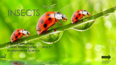 INSECTS Corinne Savignano Grade: Kindergarten, 1 st and 2 nd Environmental Science Click here to continue!