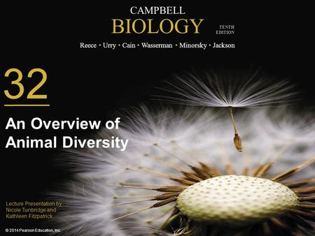 32 An Overview of Animal Diversity