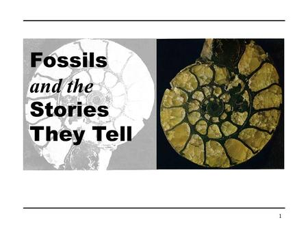 Fossils and the Stories