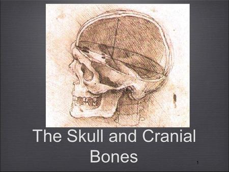 11 The Skull and Cranial Bones. Terms: Prominences Tuberosity = Rounded prominence, often rough (e.g., maxillary tuberosity) Process = Prominence or extension.