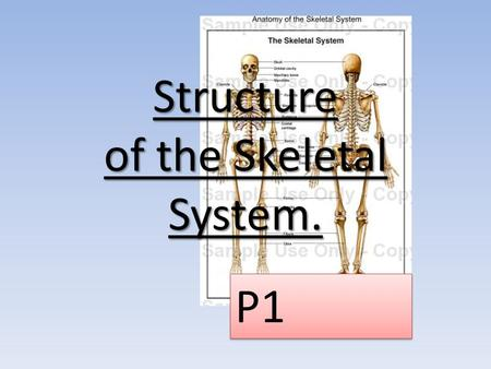 Structure of the Skeletal System.