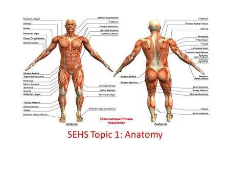 SEHS Topic 1: Anatomy.