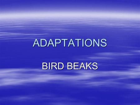ADAPTATIONS BIRD BEAKS.