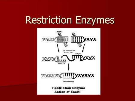 Restriction Enzymes.