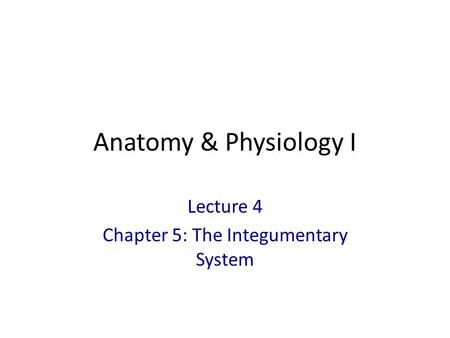 Lecture 4 Chapter 5: The Integumentary System