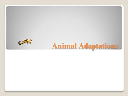 Animal Adaptations. What is an adaptation? An adaptation is a change in an animal's physical structure or behavior that helps an animal to survive in.