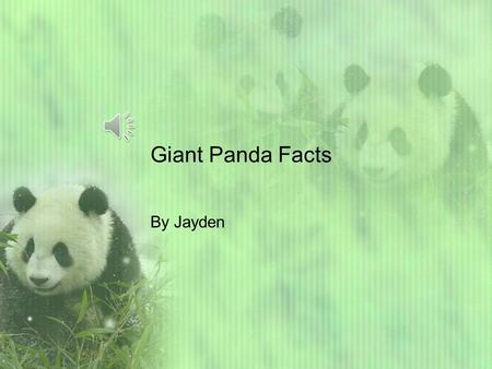 Giant Panda Facts By Jayden HELLO Friends! Did you know that pandas live in forests in China. They eat bamboo too. Pandas weigh 200-300 pounds. Pandas.