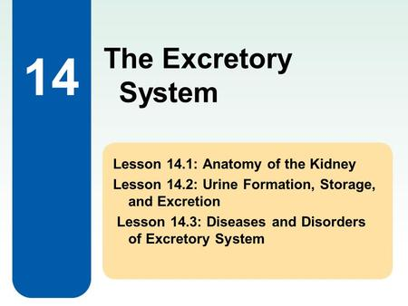 The Excretory System 14 Lesson 14.1: Anatomy of the Kidney Lesson 14.2: Urine Formation, Storage, and Excretion Lesson 14.3: Diseases and Disorders of.