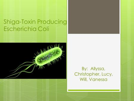 Shiga-Toxin Producing Escherichia Coli By: Allyssa, Christopher, Lucy, Will, Vanessa.