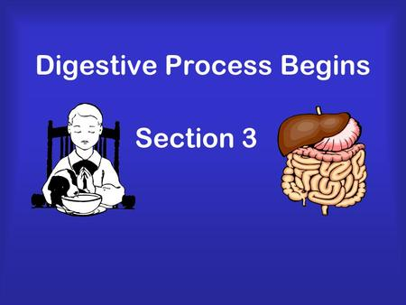 Digestive Process Begins Section 3. Functions of Digestive System Breaks down food into molecules Molecules are absorbed into blood and carried throughout.