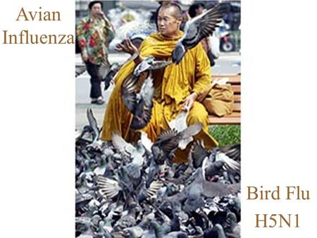 1 Avian Influenza Bird Flu H5N1. 2 Avian Influenza… Is a respiratory illness in birds Wild birds and ducks are the natural reservoir for infection, though.