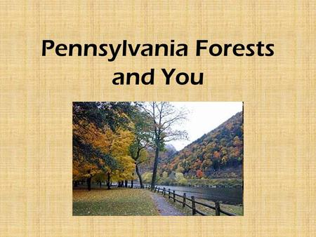 "Pennsylvania Forests and You. ""Penn's Woods"" Pennsylvania was founded by a Quaker, William Penn. In 1681, Penn's Woods included more than 28 million acres."
