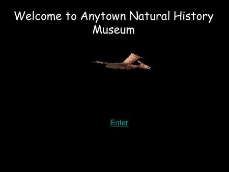 Welcome to Anytown Natural History Museum Enter. 5 6 4 2 Click on the numbers to go to the different galleries Zebra Cafe.