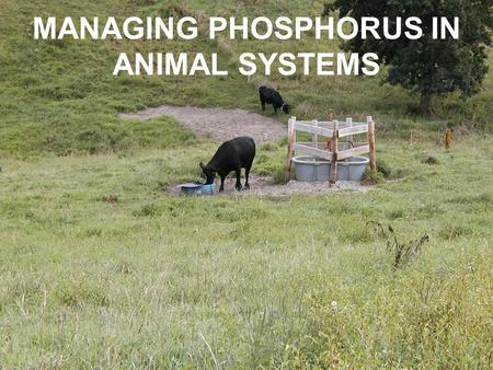 MANAGING PHOSPHORUS IN ANIMAL SYSTEMS. P CONCENTRATION IN IOWA LAKES (2001)