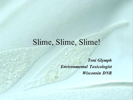 Toni Glymph Environmental Toxicologist Wisconsin DNR Slime, Slime, Slime!