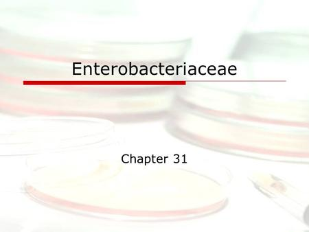 "Enterobacteriaceae Chapter 31. Introduction  ""Enteric Bacteria""  Gram-negative rods  Ubiquitous  Cause 30%-35% of all septicemias, more than 70% of."