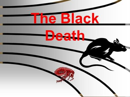 "The Black Death Key questions There are 3 questions that will be asked during the course of the lesson; 1.What is the ""Black Death""? 2.What caused the."
