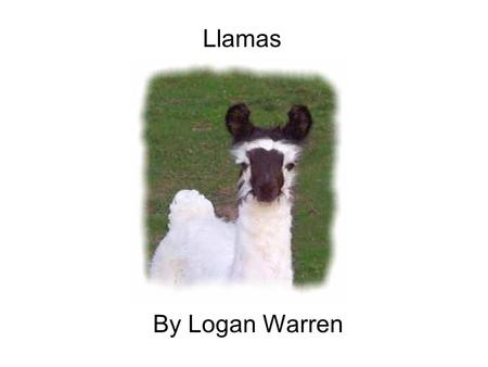 Llamas By Logan Warren. Llamas are found in South America, including Southern Peru, Bolivia, and Northern Argentina.