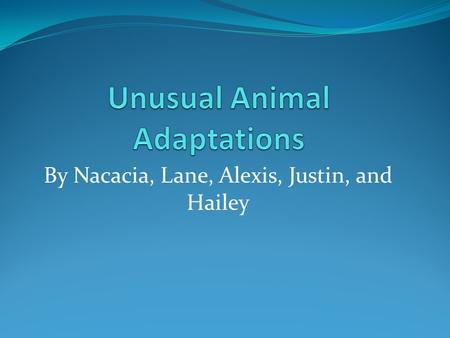 By Nacacia, Lane, Alexis, Justin, and Hailey Introduction On these slides you will see adaptations of animals. Some use camouflage, webbed feet, skin.
