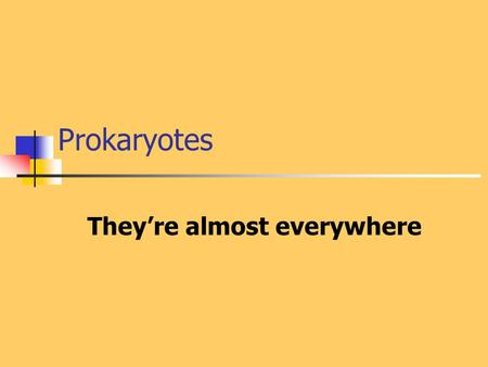 Prokaryotes They're almost everywhere. Prokaryotes were the first organism and persist today as the most numerous and pervasive of all living things.