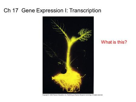 Ch 17 Gene Expression I: Transcription
