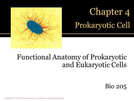 Chapter 4 Prokaryotic Cell