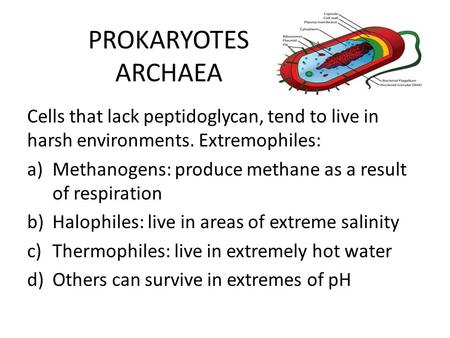 PROKARYOTES ARCHAEA Cells that lack peptidoglycan, tend to live in harsh environments. Extremophiles: Methanogens: produce methane as a result of respiration.