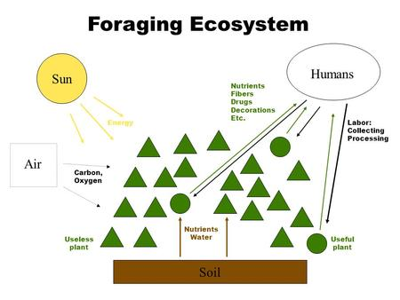 Soil Nutrients Water Sun Air Energy Carbon, Oxygen Humans Labor: Collecting Processing Useful plant Useless plant Foraging Ecosystem Nutrients Fibers Drugs.