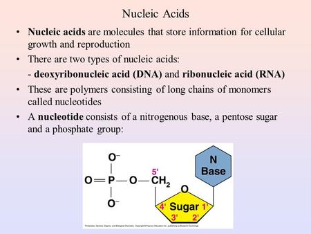 Nucleic Acids Nucleic acids are molecules that store information for cellular growth and reproduction There are two types of nucleic acids: - deoxyribonucleic.