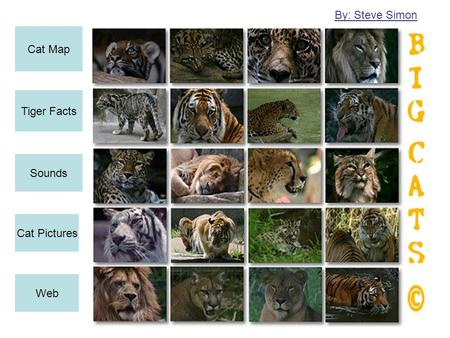 Cat Map Tiger Facts Sounds Cat Pictures Web By: Steve Simon.