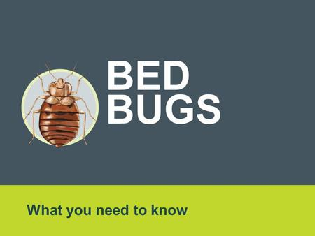 What you need to know BED BUGS. Overview Reports of bed bugs in Ontario and across Canada are on the rise. It's important to know the facts. Anyone, anywhere.