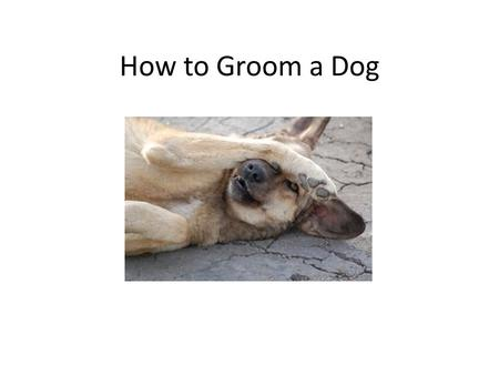 How to Groom a Dog. This is NOT the only way to groom a dog! This is the way we do things here.