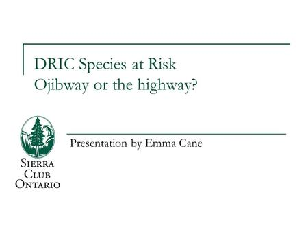 DRIC Species at Risk Ojibway or the highway? Presentation by Emma Cane.