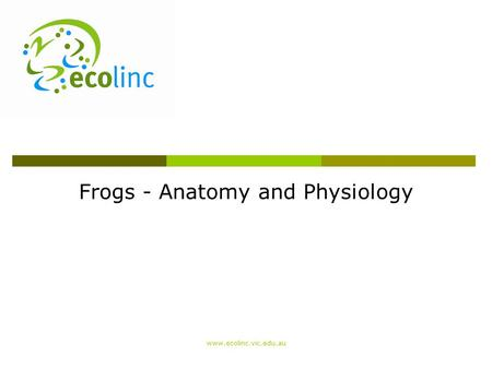 Frogs - Anatomy and Physiology www.ecolinc.vic.edu.au.