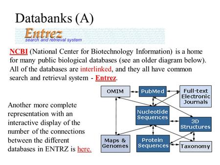 Databanks (A) NCBINCBI (National Center for Biotechnology Information) is a home for many public biological databases (see an older diagram below). All.