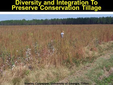 Diversity and Integration To Preserve Conservation Tillage Stanley Culpepper, University of Georgia, Tifton.