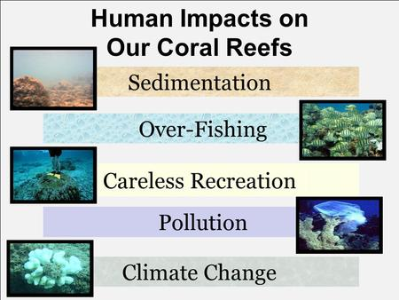 Human Impacts on Our Coral Reefs