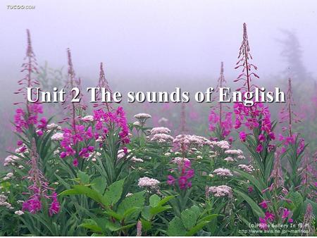 Unit 2 The sounds of English. Review Review What are the major defining features that natural languages possess? What are the major defining features.