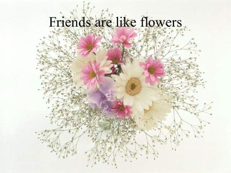 Friends are like flowers They add color to your life.
