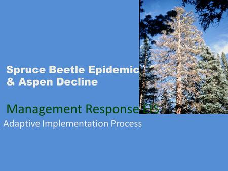 Spruce Beetle Epidemic & Aspen Decline Management Response EIS Adaptive Implementation Process.