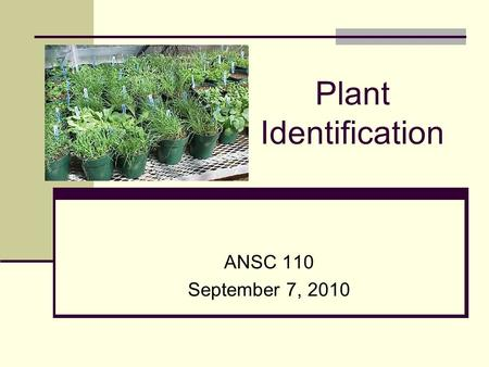 Plant Identification ANSC 110 September 7, 2010 Going to discuss: